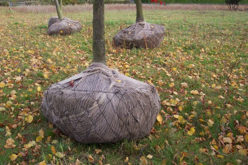 Trådplantekurve