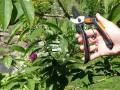 Garten Primus Allrounderen 1