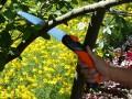 Garten Primus foldesav 1
