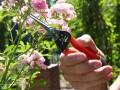 Garten Primus stiklingesaks 1
