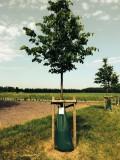 Tree King 2